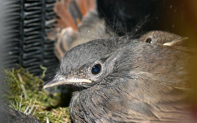 xenonvogel02_tf
